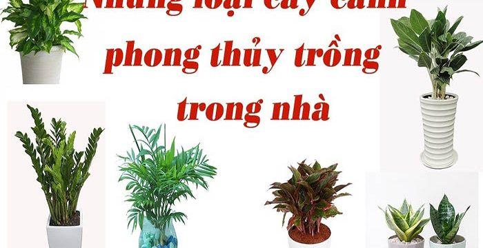 Các loại cây cảnh phong thủy trồng trong nhà mang nhiều tài lộc