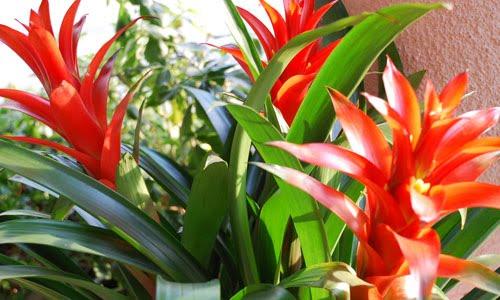 cây cảnh phong thủy trồng trong nhà