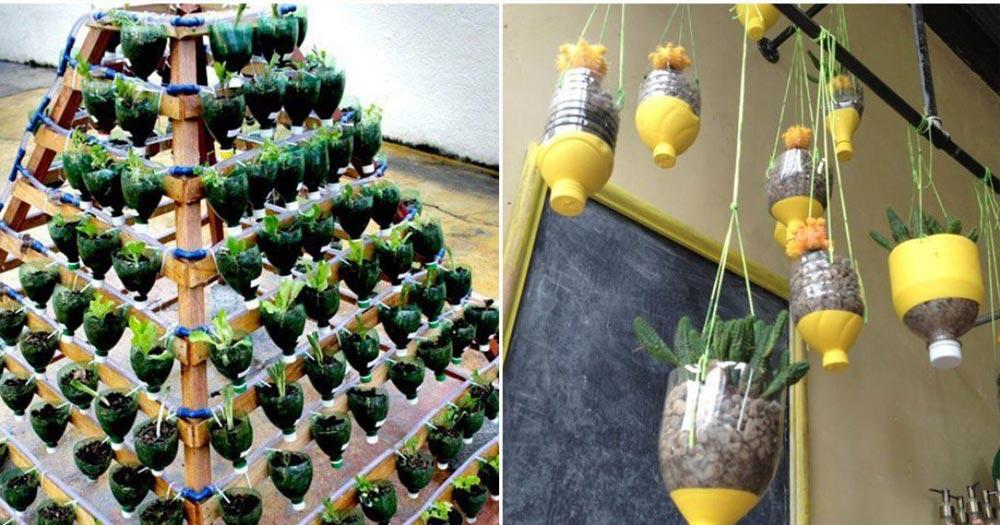 Những lưu ý quan trọng khi trồng rau trên sân thượng