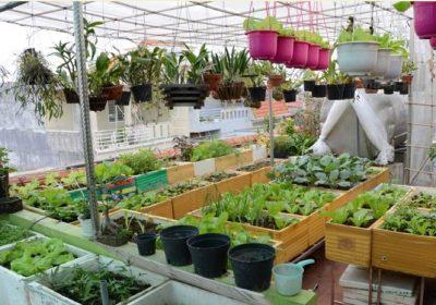 Top 8 thiết kế vườn rau trên sân thượng đẹp, dễ thực hiện
