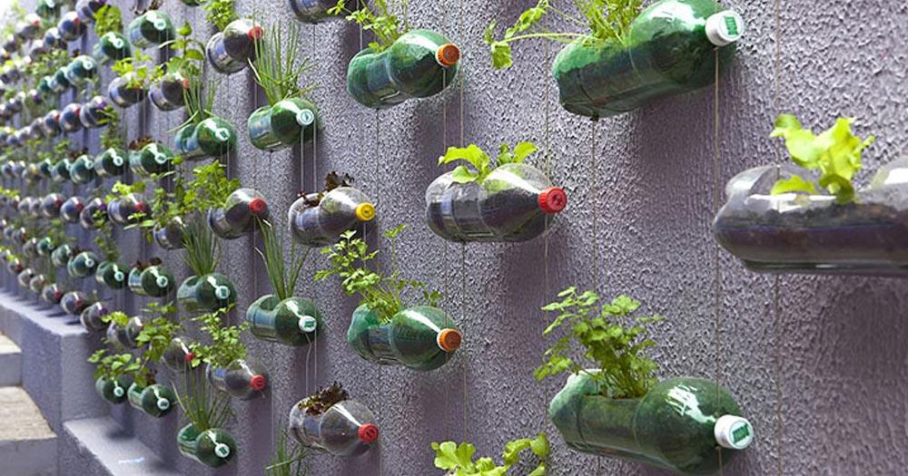 Vườn rau treo tường