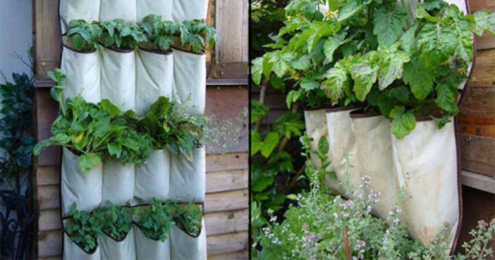 Thiết kế vườn rau trên sân thượng bằng túi vải